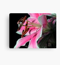 Lily on Black Canvas Print