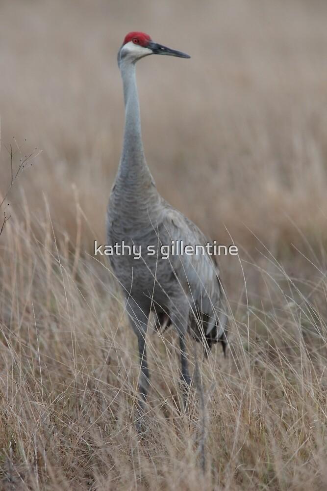 Florida Sandhill Crane by kathy s gillentine