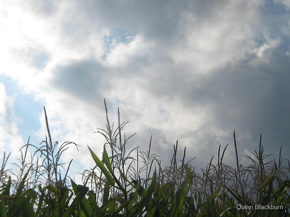 Winds of Harvest by Quinn Blackburn