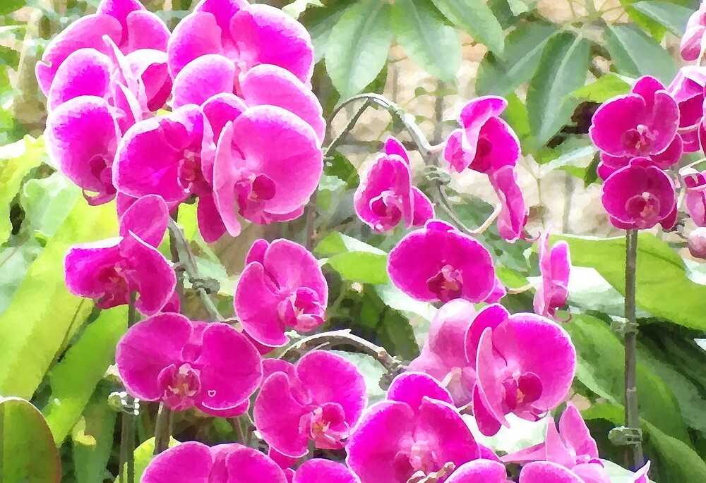 Orchids up close by Michel-O