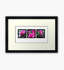 Through the Viewfinder Triptych Framed Print
