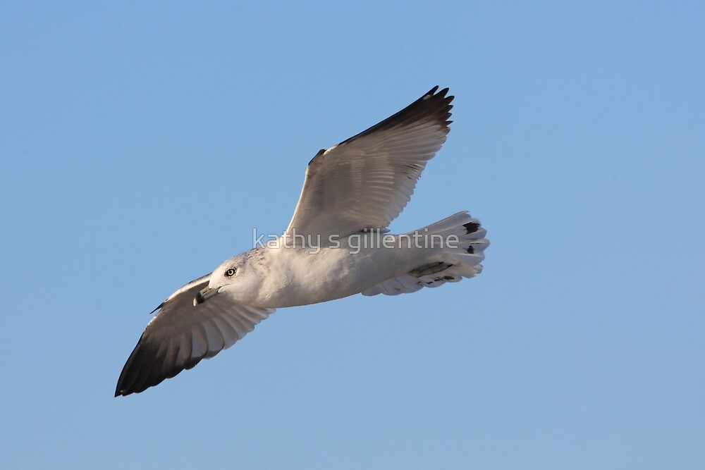 Gliding gently on the breeze by kathy s gillentine