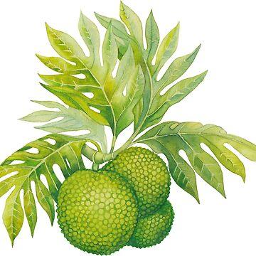 Watercolor breadfruit  by Glazkova