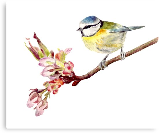 Blue Tit on Blossom by Maureen Sparling