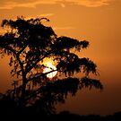 sunrise silhouette by kathy s gillentine
