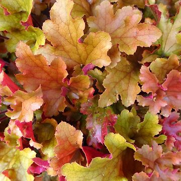 Autumn Colour by trish725