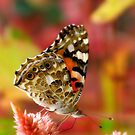 Butterfly Grotto by kibishipaul