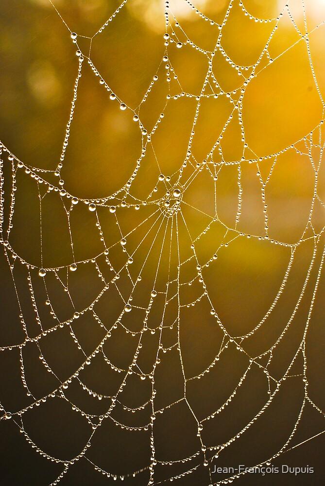 Web by Jean-François Dupuis