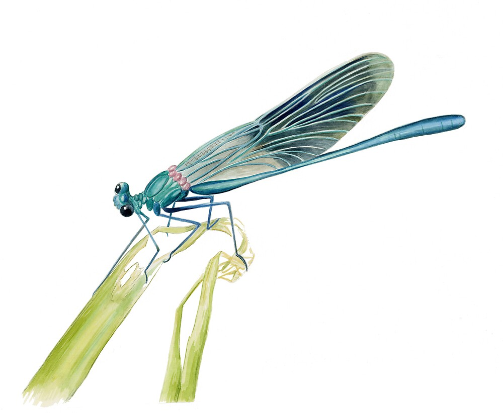 A French Damselfly by Maureen Sparling