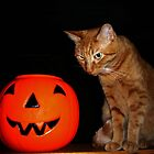 Halloween Cat is Not Amused by FrankieCat
