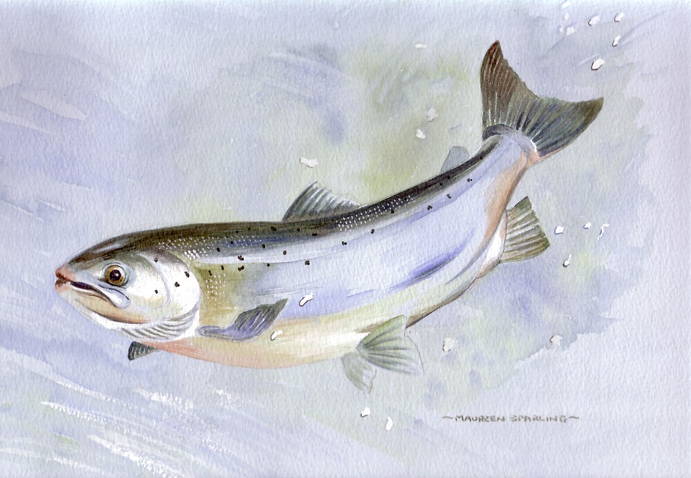 Leaping Salmon by Maureen Sparling