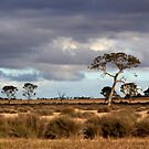 Rowsley landscape by sugarberry