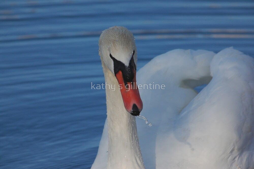 Drinking Swan by kathy s gillentine