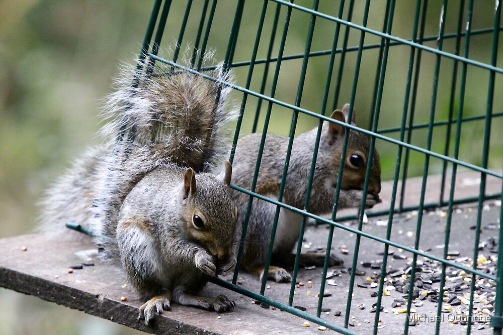 Death row squirrel by Michael Oubridge