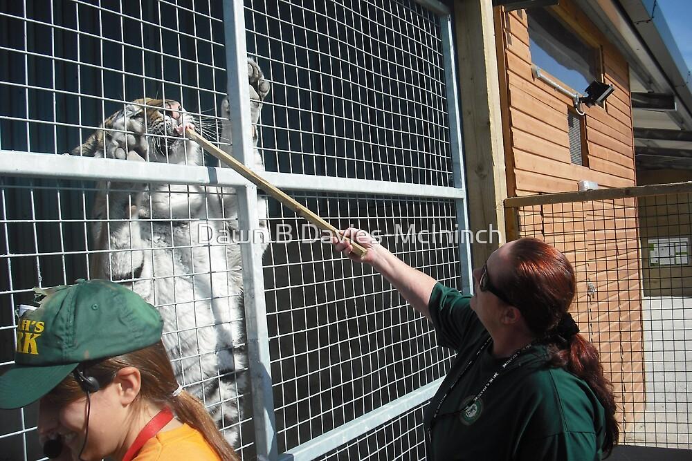 Tiger Keeper for a Day by Dawn B Davies-McIninch