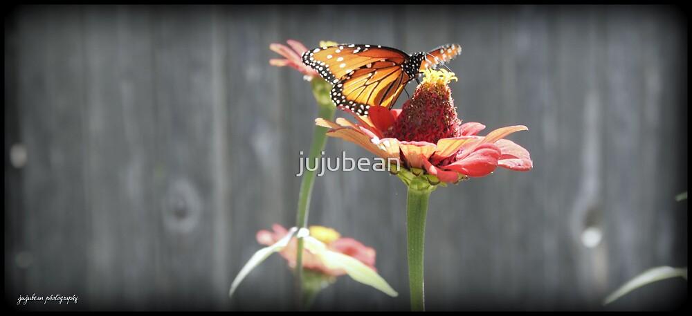 Queen Butterfly by jujubean