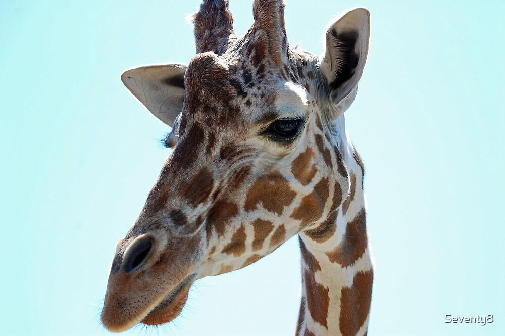 Giraffa camelopardalis by Seventy8