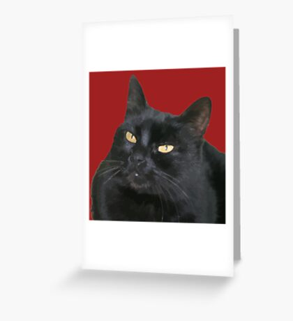 Relaxed Black Cat Portrait Vector Isolated Greeting Card