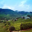 Quaint house in exotic tea plantation III by hazelong