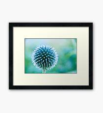 Spike Blue Framed Print