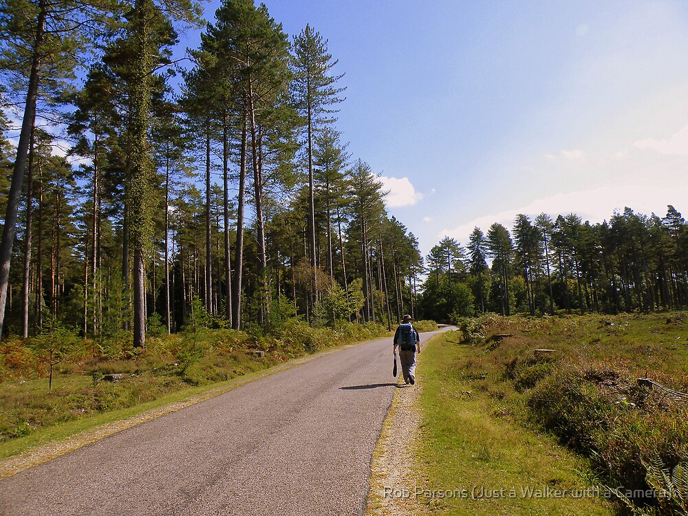 The New Forest: Strolling Along the Road by Rob Parsons (Just a Walker with a Camera)