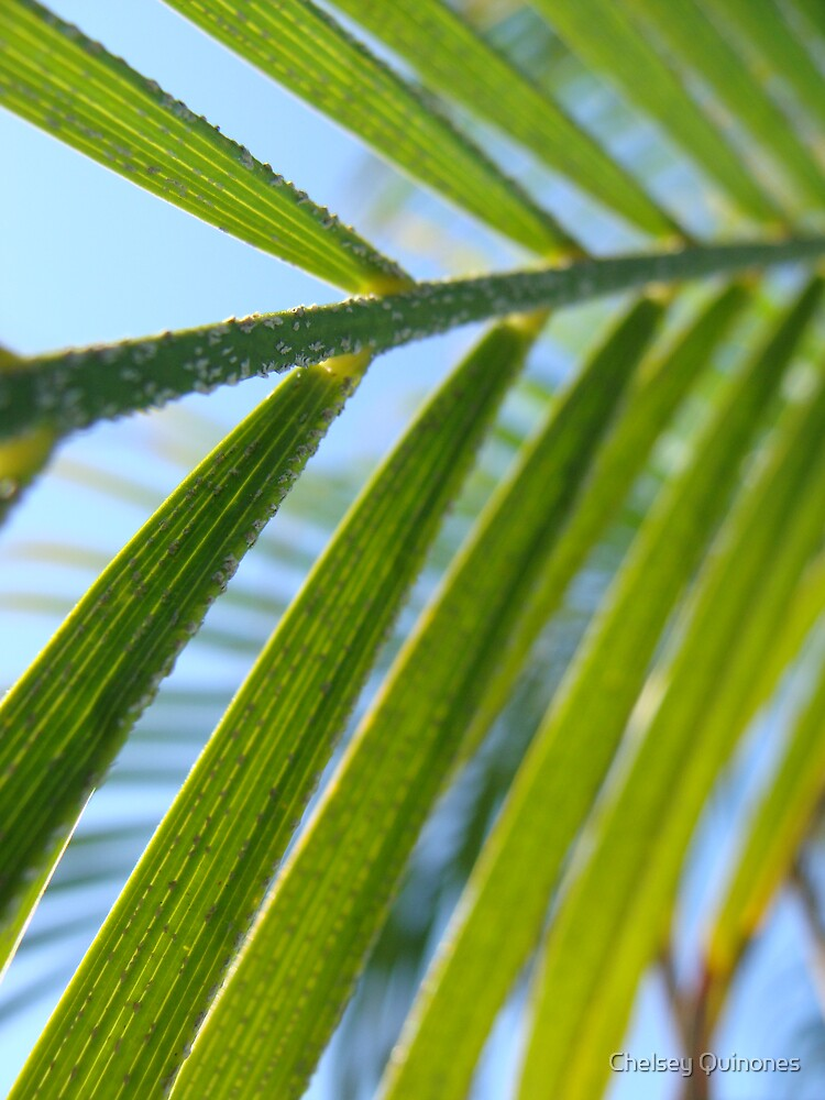 palm by Chelsey Quinones