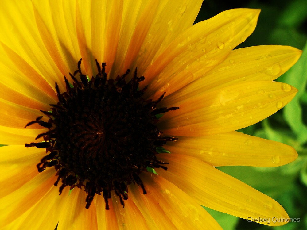 Sunflower by Chelsey Quinones