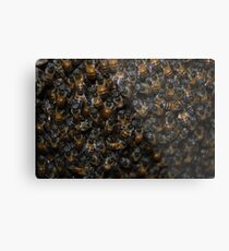 Busy Bees Metal Print