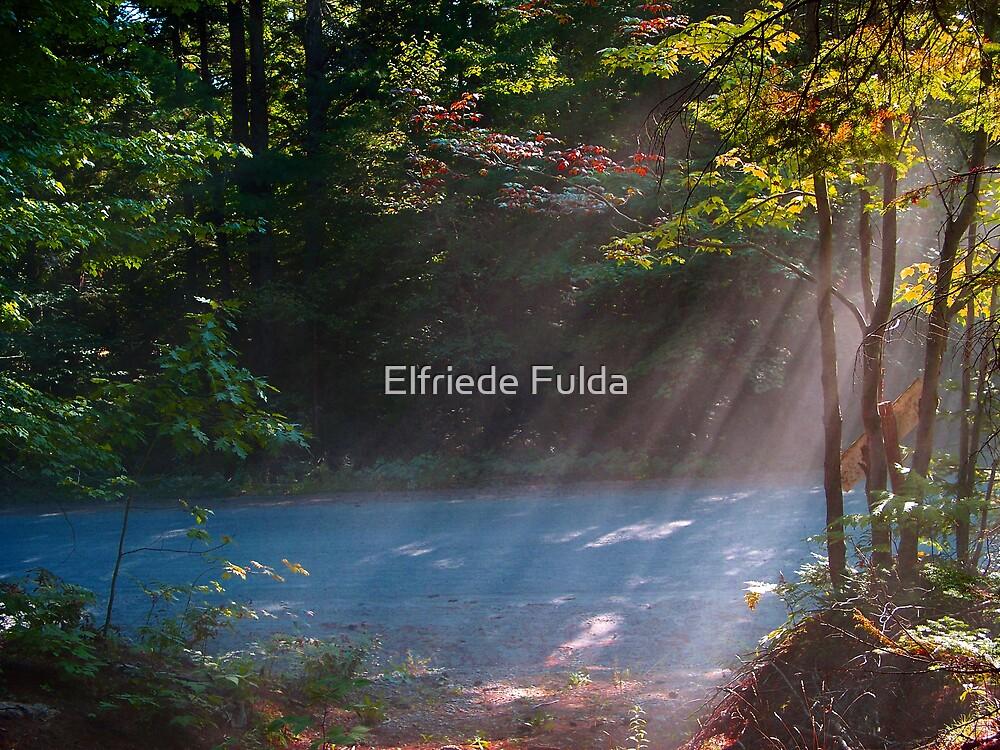 Rays ! by Elfriede Fulda
