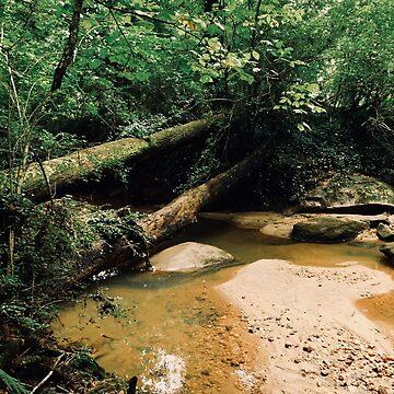Fallen Tree by D-Taurus