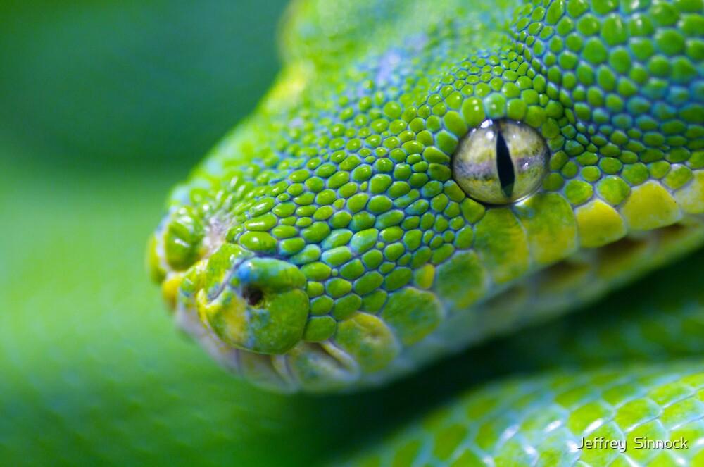 Snake head by Jeffrey  Sinnock
