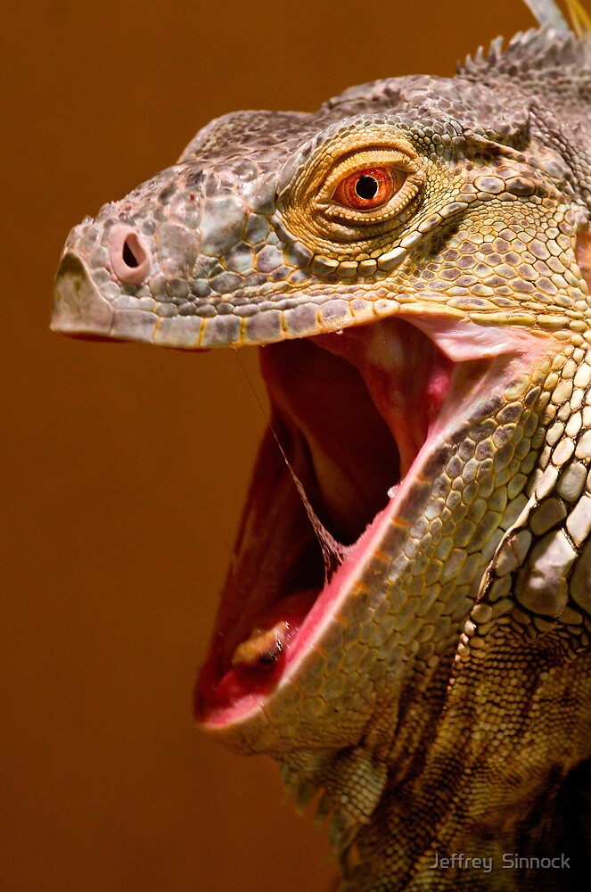 Iguana Head by Jeffrey  Sinnock