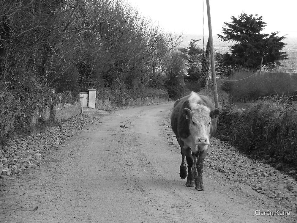 Rush Hour by Ciarán Kane
