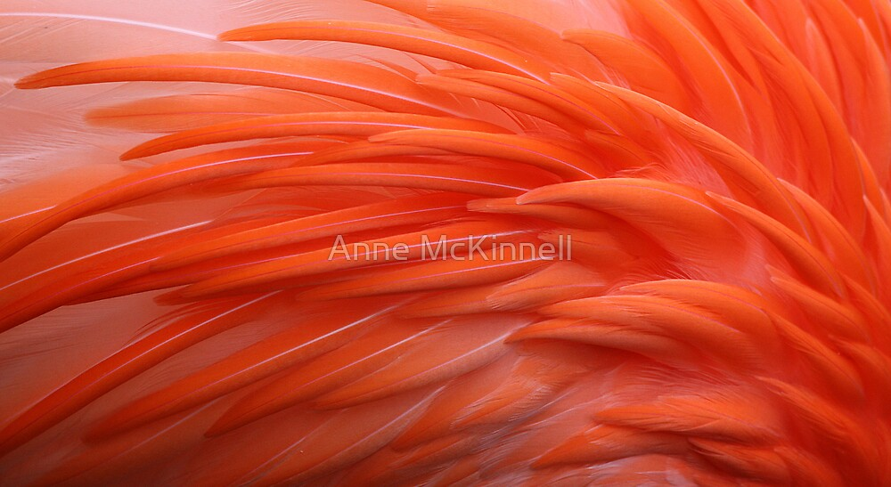 Flamingo by Anne McKinnell