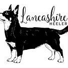 Lancashire Heeler by aheadgraphics