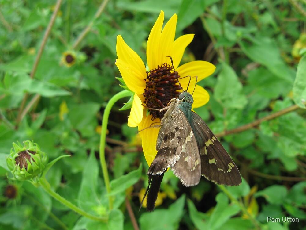 humming bird moth on flower by Pam Utton