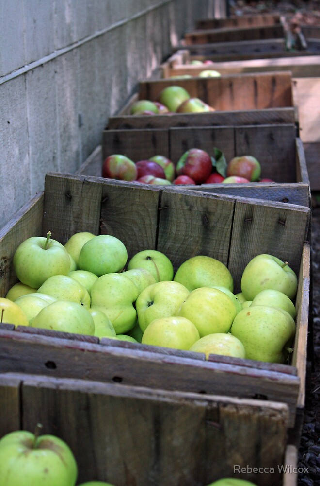 Apples by Rebecca Brann