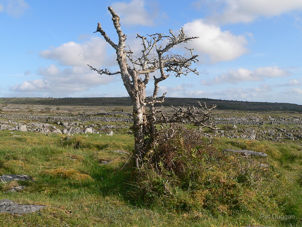 Weather Beaten Tree--The Burren Co.Clare[Please View Larger] by Pat Duggan