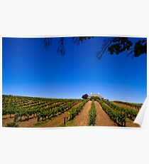 Barossa Vineyard - South Australia Poster