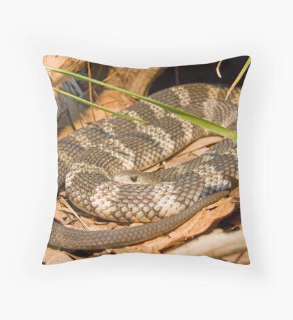 Eastern Tiger Snake, Queensland, Australia Throw Pillow