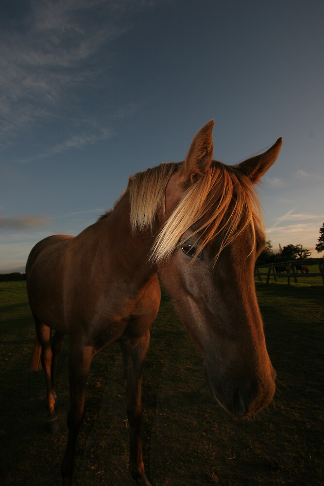 pony in the setting sun by dave wilmot