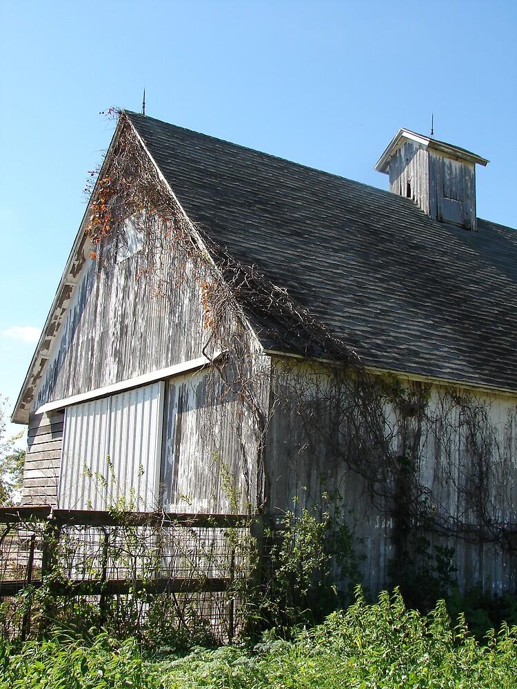 White Barn in Autumn by angelandspot