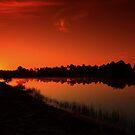 orange glow by kathy s gillentine