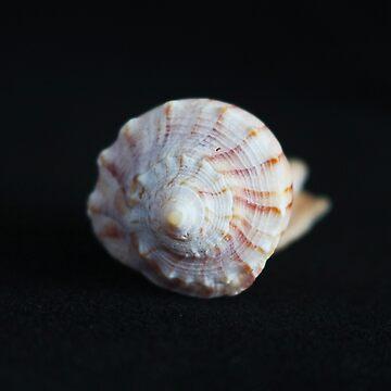 Sea Shell on Black II by Michiale