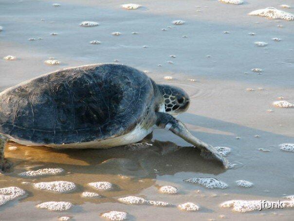 Sea Turtle Crawl by jfunk