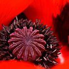 The Heart of a Poppy by karina5