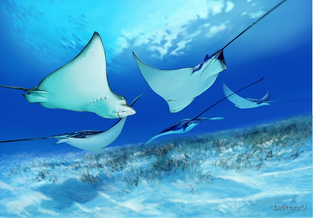 SPOTTED EAGLE RAY 4 by DilettantO