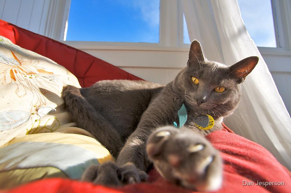 Cat Nap by Dan Jesperson
