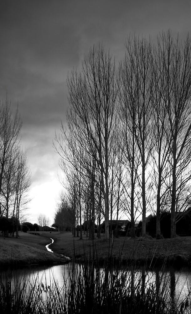 Trees by carolynbraid