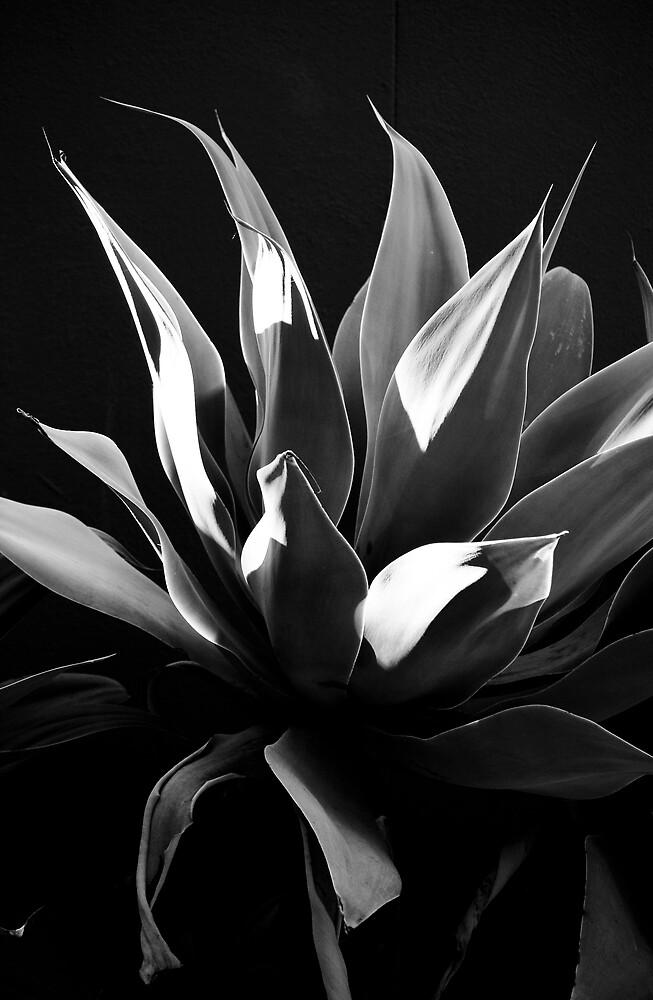 Succulent by carolynbraid